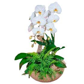 Orquídea Cascata 02 hastes em vaso de asplenio