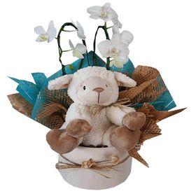 Box Menino com mini orquídea e pelúcia ovelhinha