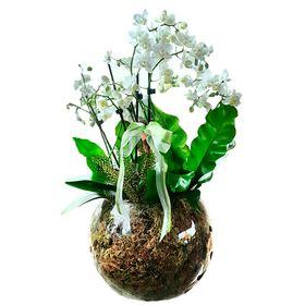 Coquetel de orquídea no vidro