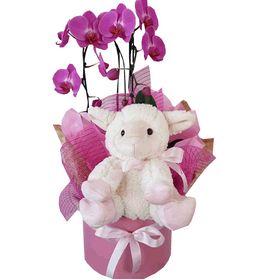 Box Menina com mini orquídea e pelúcia ovelhinha