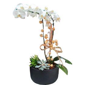 Orquídea 02 hastes com Suculentas