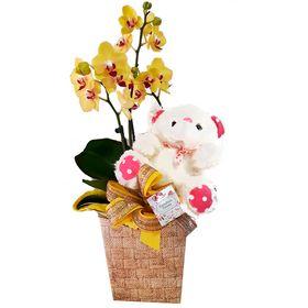 Orquídea decorada com Urso