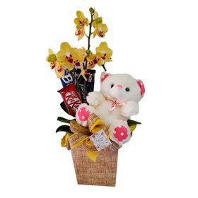 Orquídea decorada com Urso e Chocolates